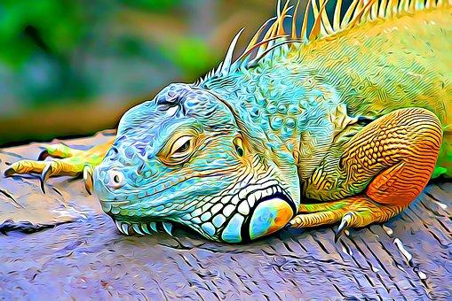Color, Reptile, Eye, Scales, Nature, Lizard, Gyíkféle