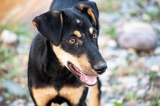 Dog, Black, Pet, Animal, Puppy, Portrait, Snout, Cute