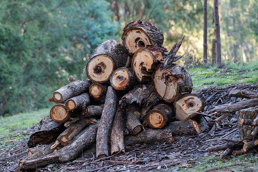 Wood, Wood Pile, Logs, Firewood, Pile, Timber, Stack