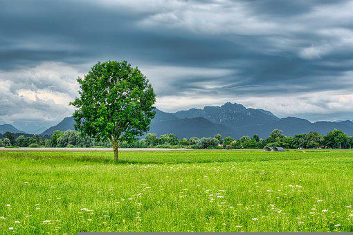Landscape, Upper Bavaria, Chiemgau, Tree, Individually