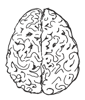 Brain, Hemispheres, Drawn Brain, Figure