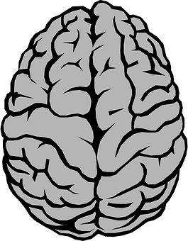 Brain, Anatomy, Hemispheres, Gray Brain