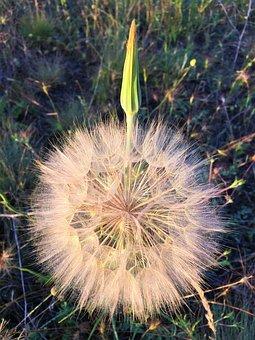 Flower, Ot, Nature, Rural, Plant