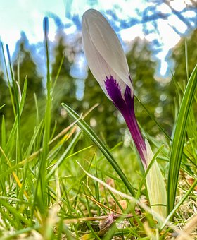 Flower, Spring, Flowers, Nature, Plant