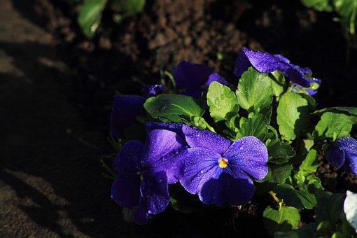 Lila, Flower, Nature, Purple, Natural, Petals, Bouquet
