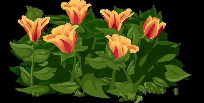 Tulips, Flowers, Plants, Yellow, Red, Petals, Orange
