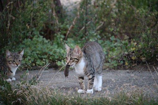 Cat, Mousehunt Film, Pinch, Kitten, Cat Baby