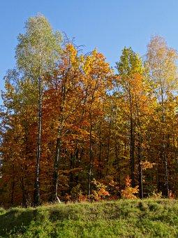 Autumn, Poland, Landscape, Olkusz, Colors, Tree