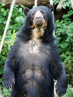Bear, Spectacled Bear, Zoo, Enclosure