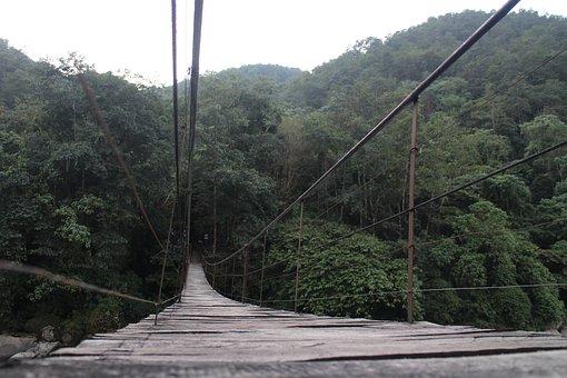 Wooden Legs, Landscape, Forest, River, Hanging Bridge