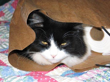 Cat, Bag, Fun, Animal, Cute, Paper, Pet, Fur, Go Away