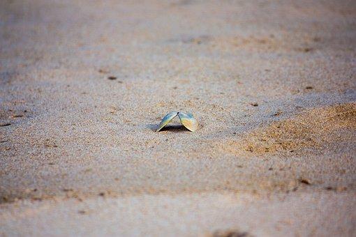 Shell, Sand, Beach, Nature