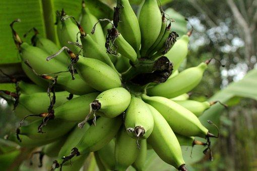Bananas, Fruit, Food, Fresh, Sweet, Nature, Plant