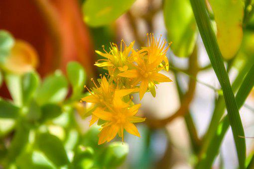Flowers, Yellow, Easter, Prayer, Beauty, Flower, Nature