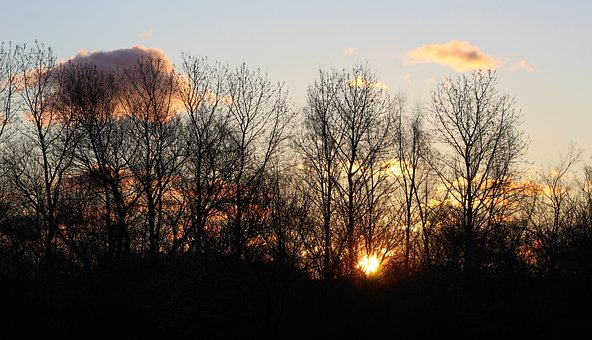 Nature, Plants, Tree, Branches, East, West, The Sun