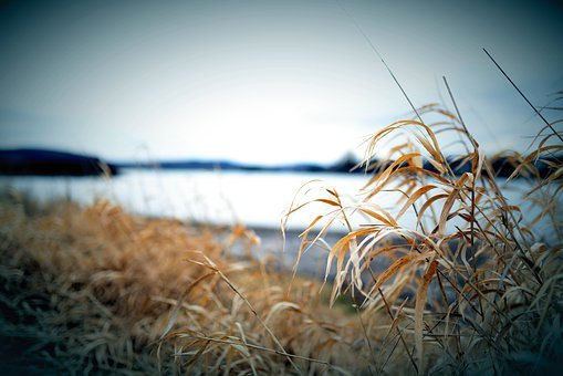 Grasses, Lakeside, Lake, Nature, Grass