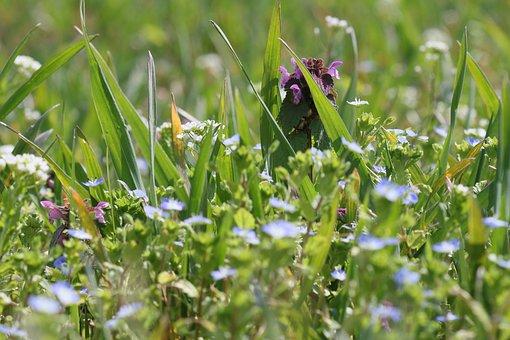 Flower Meadow, Spring, Nature, Bloom