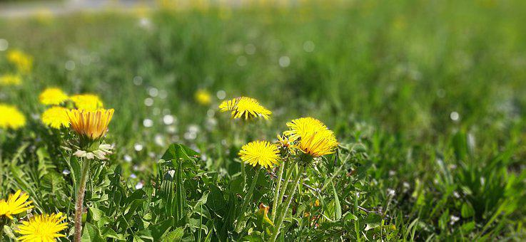 Green, Yellow, Nature, Field, Spring