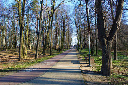 Nature, Plants, Tree, Park, Way, The Path, Green