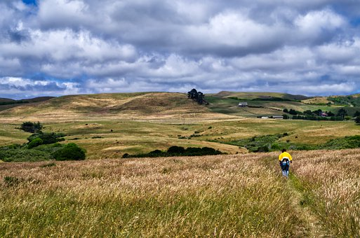 Hiking, Usa, Sky, Yellow, Meadow, Hill, Hilly, Path