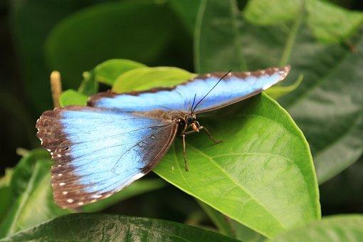 Simon, Papiliorama, Kerzers