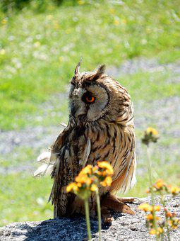Owl, Bird, Animal World, Nature, Eagle Owl, Eyes, Bill