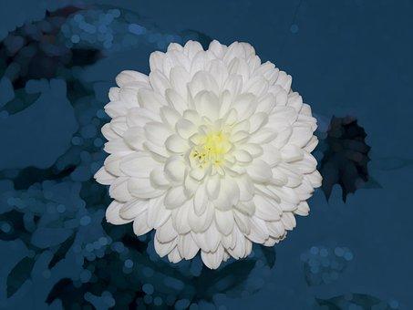 White Flower, Flower, Garden, Spring, Bloom, Nature