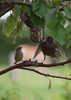 Birds, Feeding, Star, Sparrow, Feather, Animal World