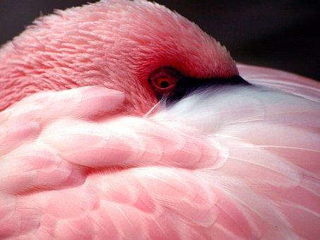 Flamingo, Bird, Animal, Pink, Plumage, Nature, Feathers