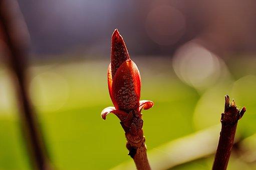 Bud, Spring, Blossom, Bloom, Nature, Pink, Flower