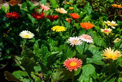 Flowers Of Garden, All Flowers, Park, Outdoor