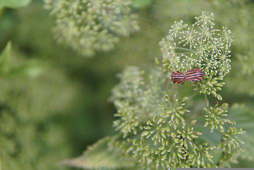 Insect, Pairing, Beetles, Bugs, Red, Black, Green