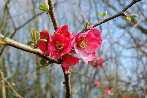 Flowers, Roses, Red, Buds, Spring, Shrub, Nature