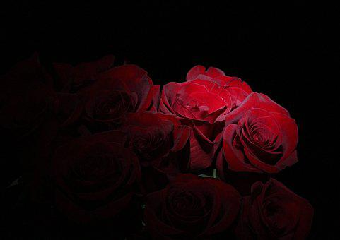 Roses, Bouquet, Flowers, Love, Novel, Romantic, Flower