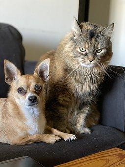 Dog, Cat, Pet, Love, Puppy, Pets, Sweet