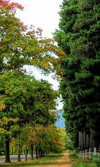 Path, Trees, Autumn, Nature, Landscape