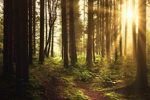 Forest, Light, Away, Glade, Sun, Nature, Autumn