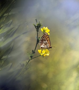 Butterfly, Insect, Nature, Macro, Spring, Butterflies