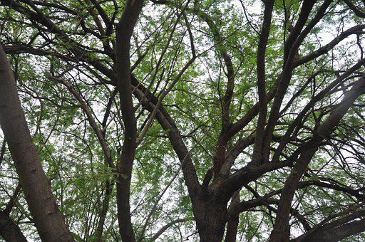 Branches, Tree, Nature, Branch, Leaves, Green, Plant