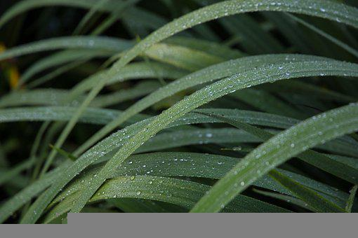 Grass, Dew, Green, Morning, Summer, Nature, Plant
