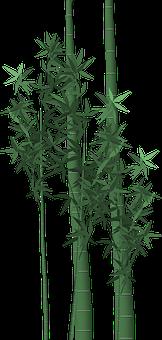 Bamboo, Poaceae, Stalks, Isolated, Bambusoideae