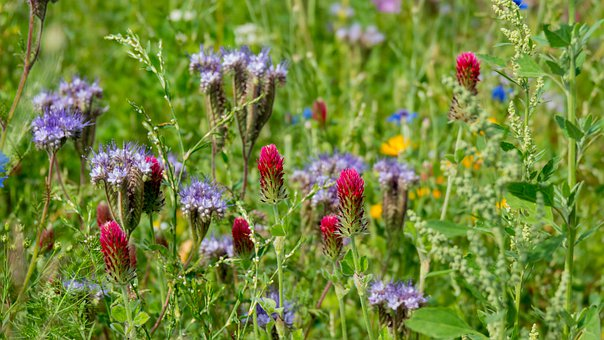 Summer Meadow, Flowers, Colors, Bloom, Red, Green