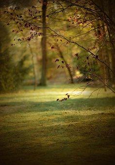 Spring, Sun, Light, Nature, Easter