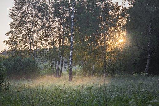 Plants, Green, Forest, Swamp, Field, Dawn, Morning, Fog