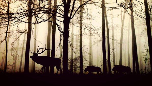 Forest, Fog, Hirsch, Wild Boars, Nature, Animals, Trees