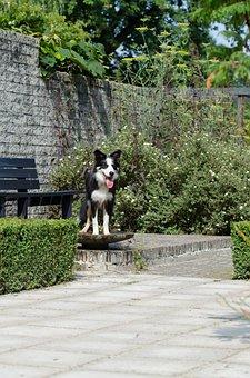 Bird Bath, Dog In Bird Bath, Cooling, Border Collie