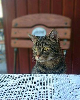 Cat, Favorite, Kitten, Fur, Love, Dachowiec, Hugging