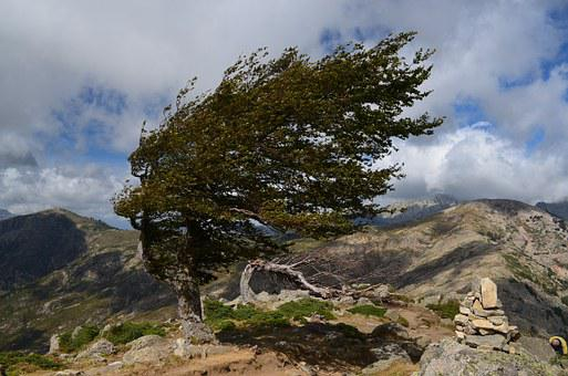 Wind, Corsican, Mountain, Curved Shaft, Nature
