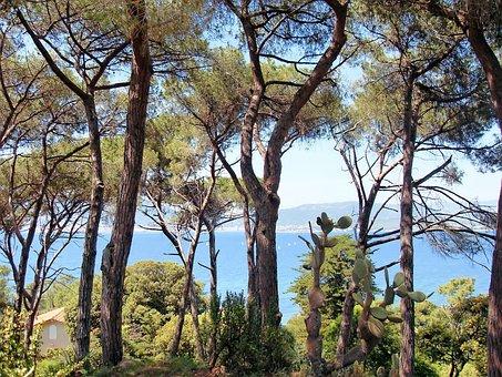France, Corsican, Ajaccio Bay, Hiking, Pine, Shore, Sea