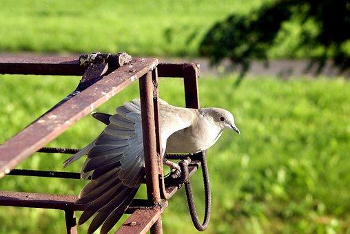 Dove, Bird, Wings, Side, Poses, Messenger, Pen, Angle